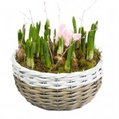 Spring Bulb Basket